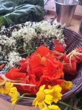 Flor de sabugueiro 2