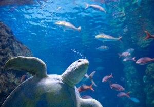 aquatic-life